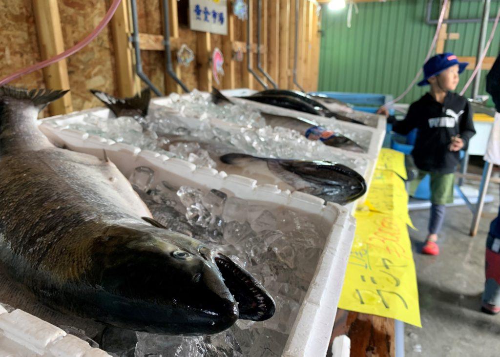 北海道伊達市レンタル釣り船、ヒラメ・カレイ・シャケ釣りの黄金マリン、鮮魚販売の「黄金市場」、販売用シャケ、サクラマス画像